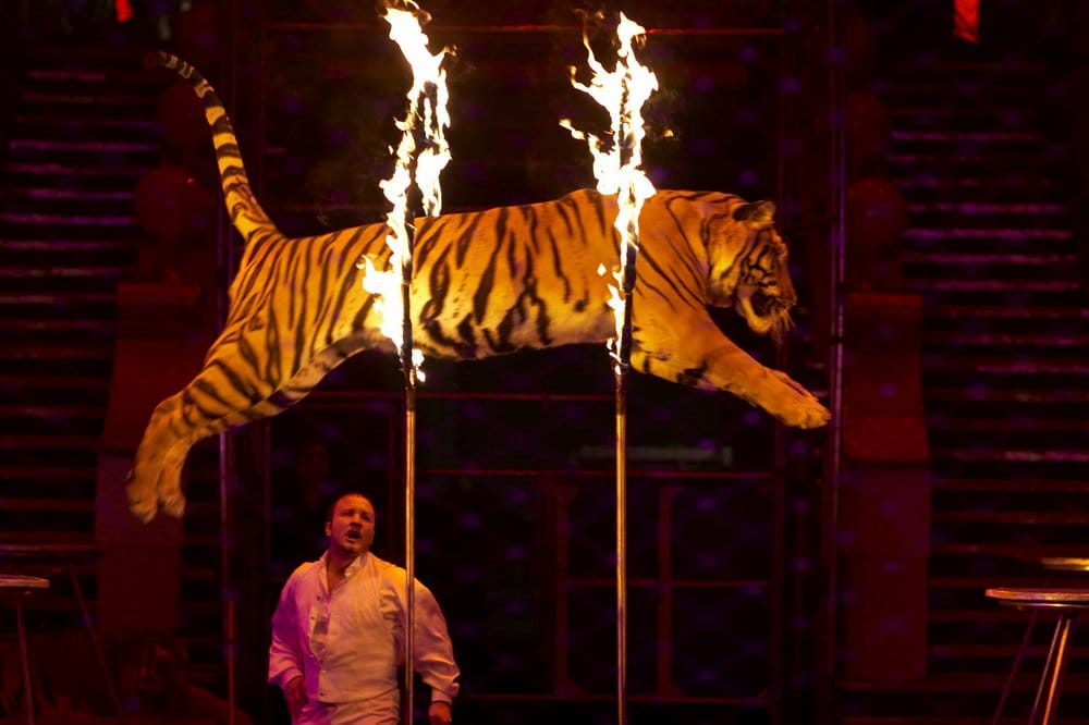 scotland bans wild animals in circuses