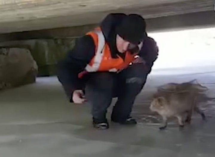 cat thrown in river