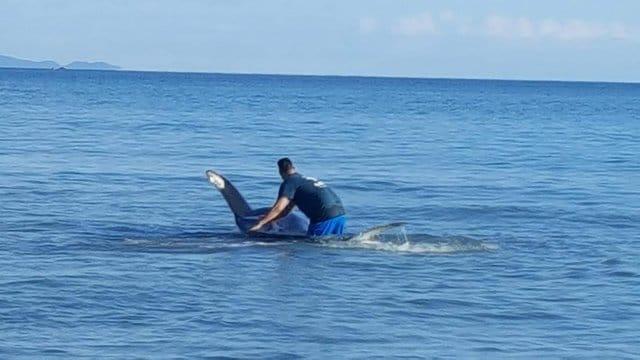 orca new zealand