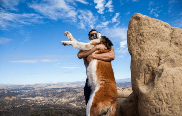 dog dad calms down st bernard