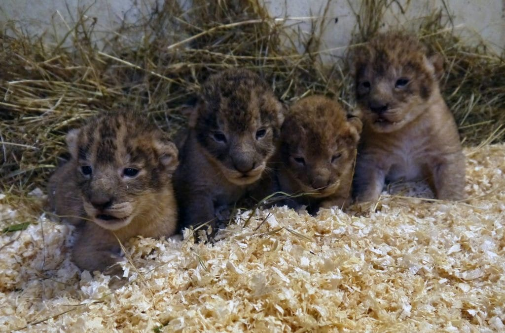 boras zoo