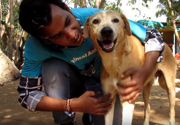 dog rescue india