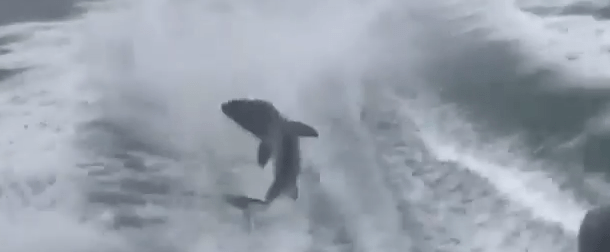 shark abuse