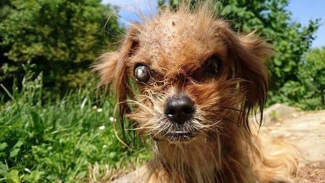 Gruseliger Hund