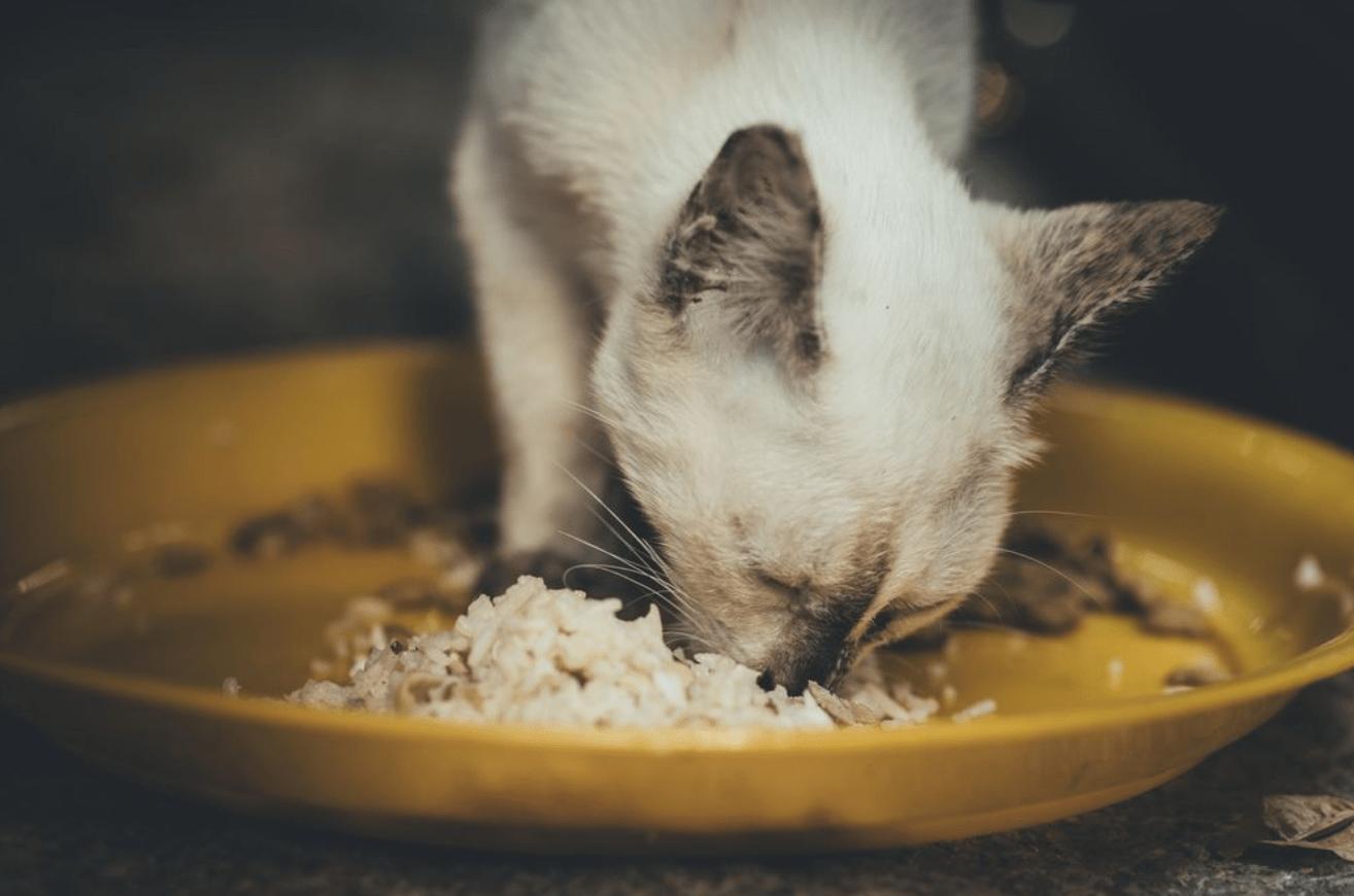 Cat rice diarrhoea