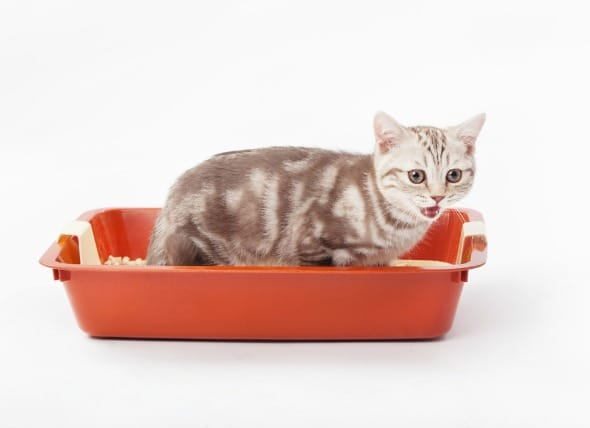 Constipation In Cats Treatment Holidogtimes