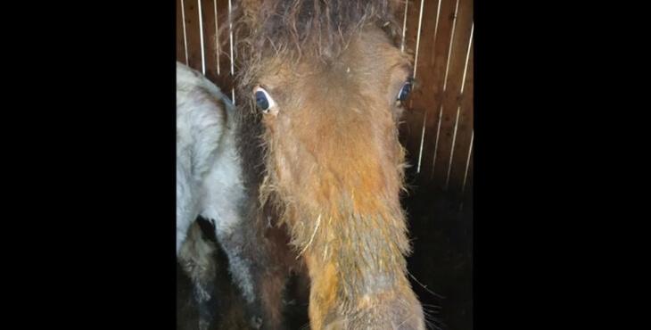 Loir-et-Cher : un élevage de chevaux soupçonné de maltraitance