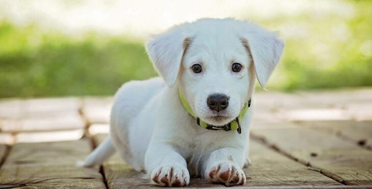 Metz : il force un cabinet vétérinaire pour trouver des médicaments pour son chien