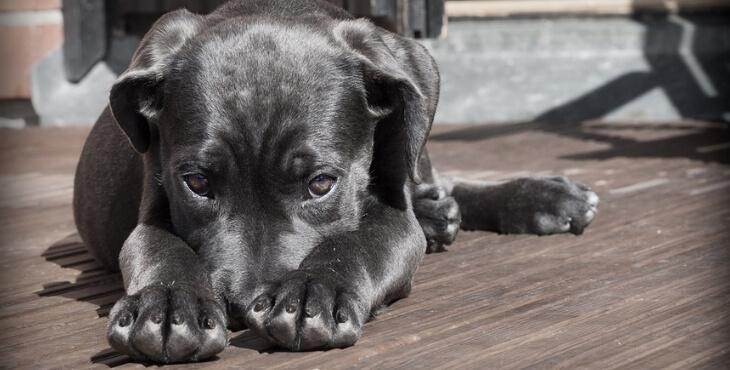 Angers : il jette un chien sous un bus