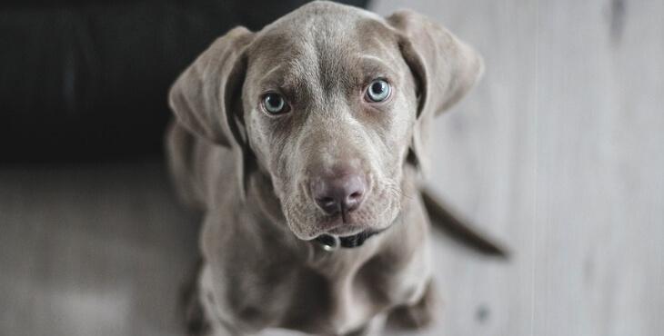Statut de personne animale : la demande de la Fondation 30 Millions d'Amis