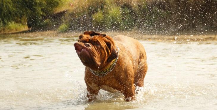 Pyrénées-Orientales : un chien meurt après s'être baigné