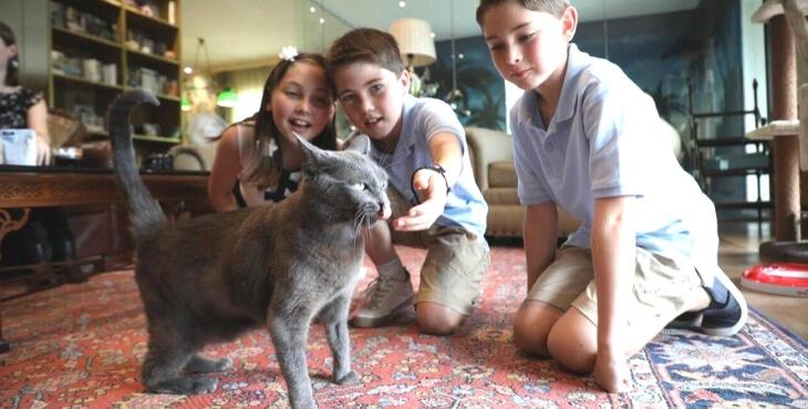 France : première greffe de rein sur un chat
