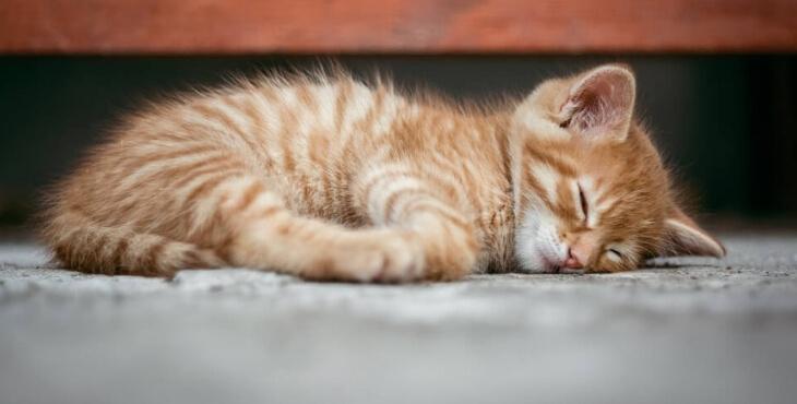 Hautes-Alpes : sauvetage de 43 chatons et d'un chiot