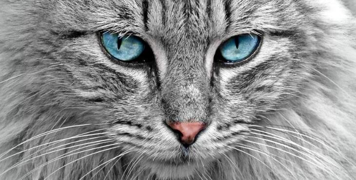 Bordeaux : un chat retrouvé après 11 ans de disparition