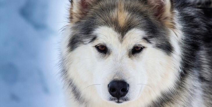 Pyrénées-Atlantiques : des chiens sauvent leurs maîtres en montagne