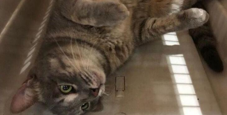 Aéroport d'Orly : un chat retrouvé avec 41 jours