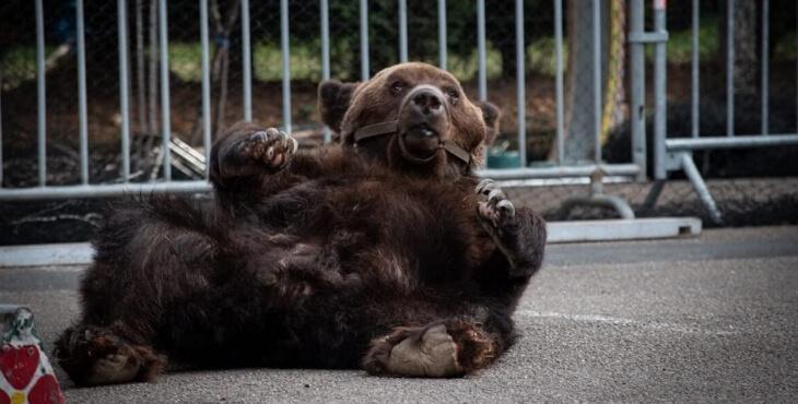 Mort de l'ours Mischa