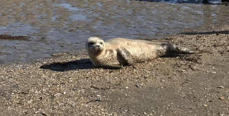 France : un phoque violenté par un pêcheur sur une plage