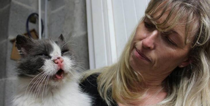 Bretagne : des chats visés par des tirs