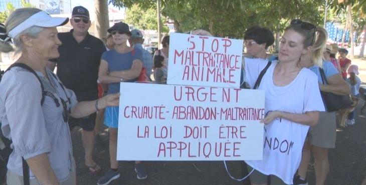 Nouvelle-Calédonie : manifestation contre la maltraitance animale