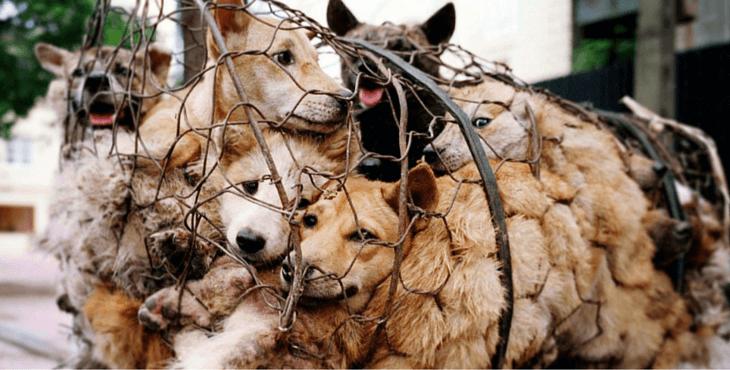 Shenzhen : interdiction de la viande de chat et de chien ?