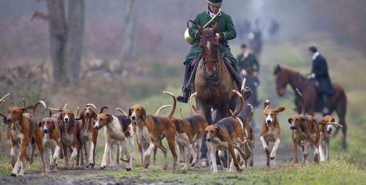 Le gouvernement face au lobby de la chasse à courre