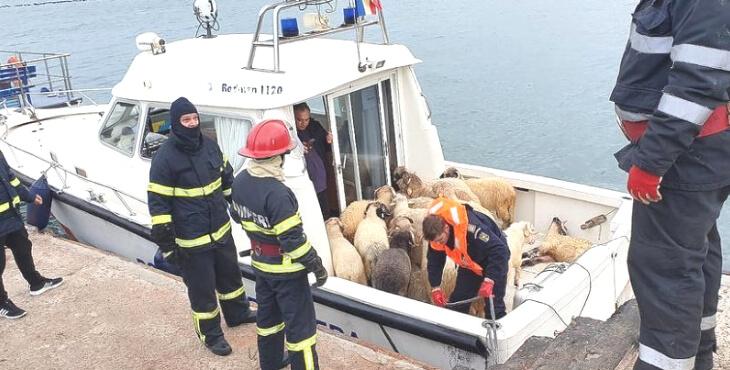 Roumanie : des milliers de moutons morts dans un naufrage
