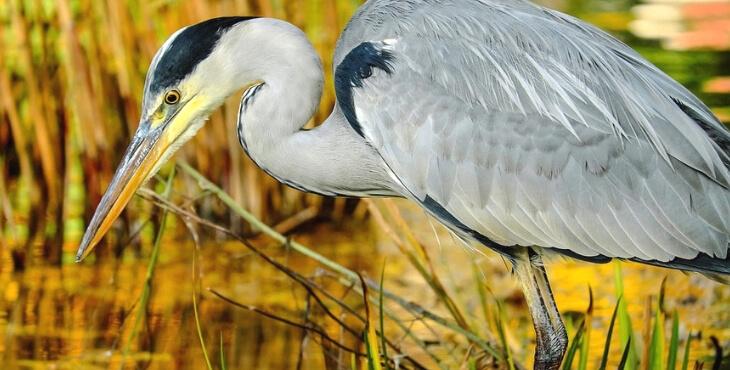 Vaucluse : six oiseaux blessés par des chasseurs soignés