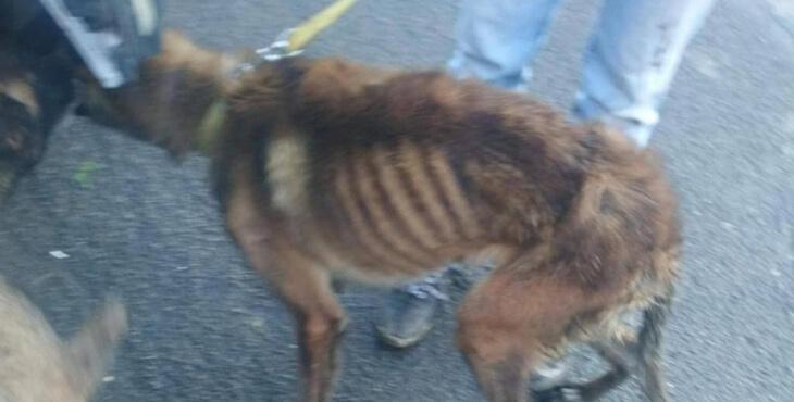 Aisne : trois chiens à l'agonie sauvés de justesse