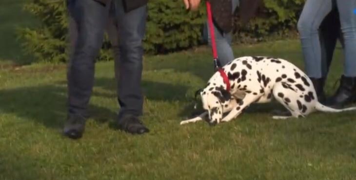 Orne : un chien pour aider les élèves d'un collège