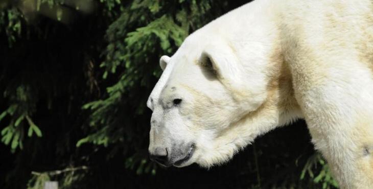 Zoo d'Amnéville : un ours à la déchetterie