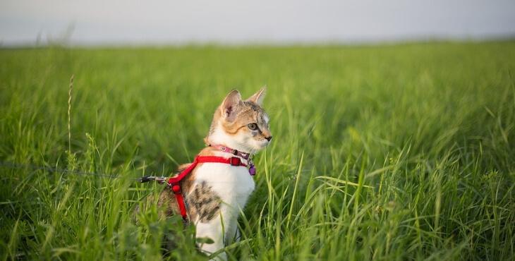 Landas : les chats doivent être tenus en laisse