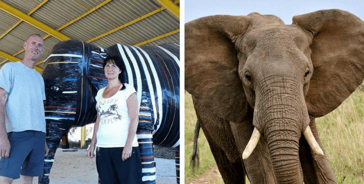 France : ouverture du premier sanctuaire pour éléphants