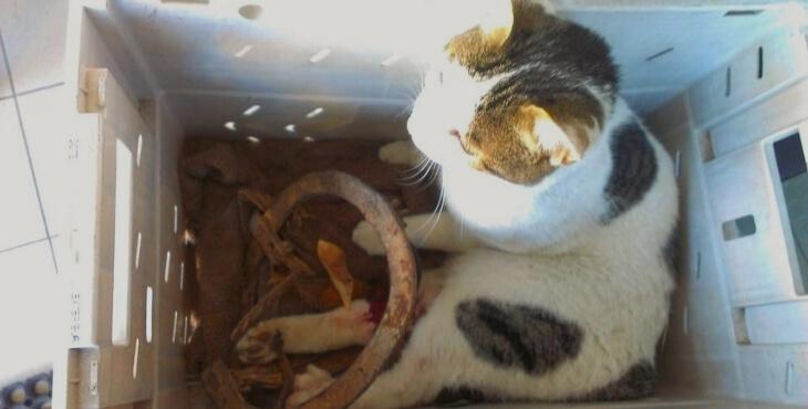 Béziers : des chats amputés à cause d'un piège-à-loup