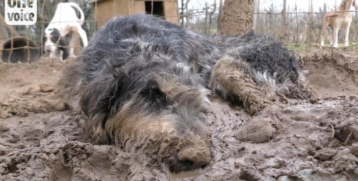 Dordogne : l'élevage de chiens de chasse encore pointé du doigt