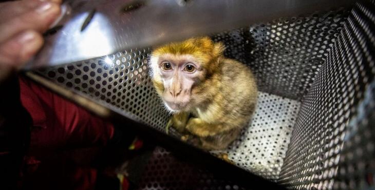 Seine-Saint-Denis : sauvetage d'un petit macaque