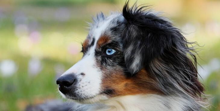 France : le classement des chiens préférés
