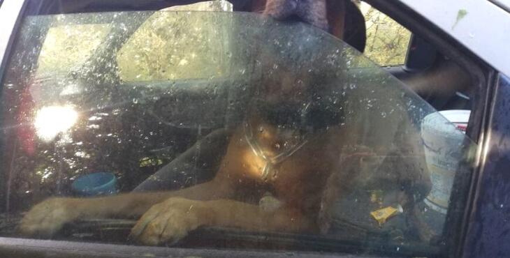 Brest : un chien vit dans une voiture