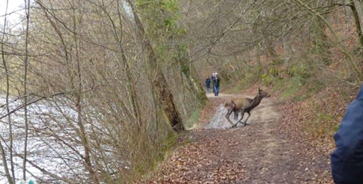 Chantilly : un cerf abattu devant des enfants