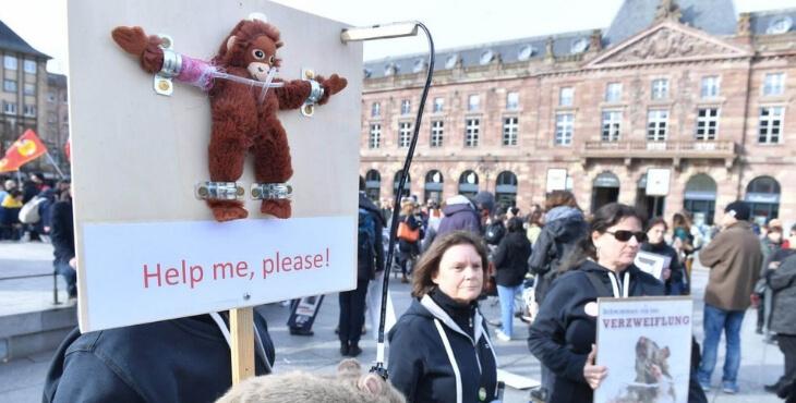 Strasbourg : manifestations contre les expérimentations animales