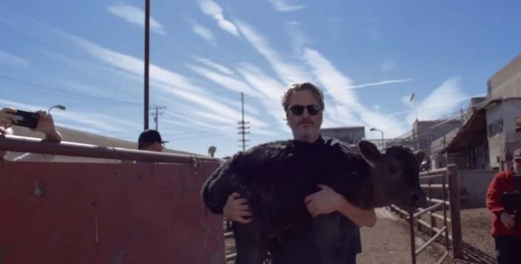 Joaquin Phoenix sauve un veau et sa mère d'un abattoir