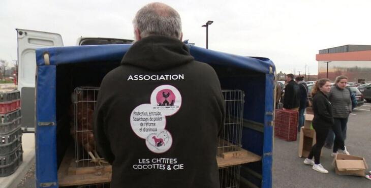 Somme : une association au secours des poules