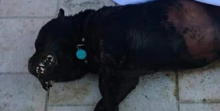 Alpes-Maritimes : un chien volé, puis tué