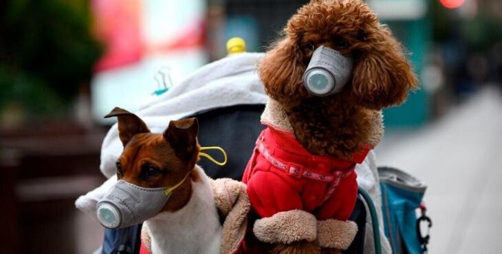 Le réseau Pet Alert constate une augmentation du nombre de chiens perdus