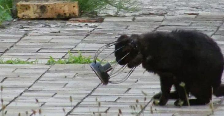 Bas-Rhin : un chat coincé dans un lampe