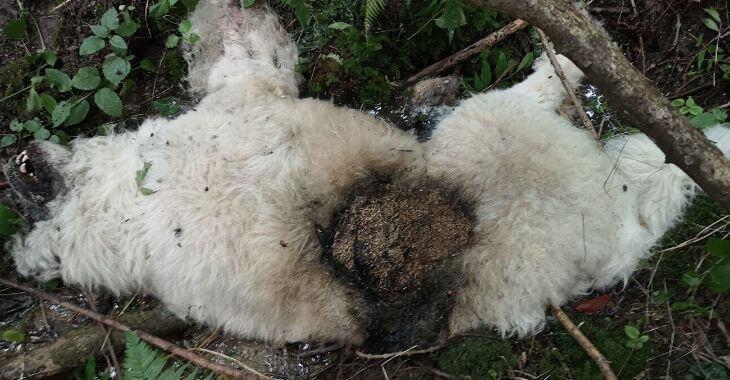 Ariège : un chien tué par balles