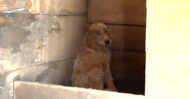 Dordogne : des chiens maltraités par un chasseur