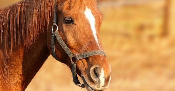 Dunkerque : un cheval frappé