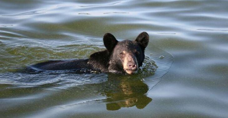 États-Unis : sauvetage d'un ourson