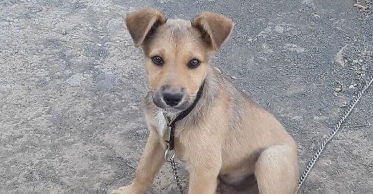 Prison ferme pour un tueur de chien